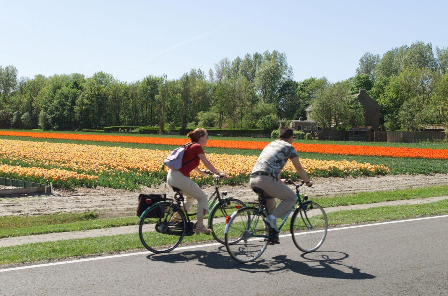 tulip bike tour enjoy springtime with dutch pedelec toursdutch pedelec tours. Black Bedroom Furniture Sets. Home Design Ideas