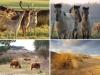 nationaal-park-zuid-kennemerland