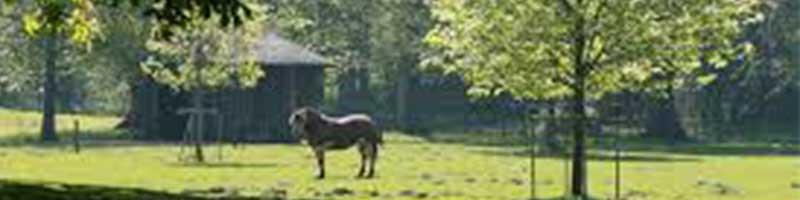Velserbeek_park_800x200